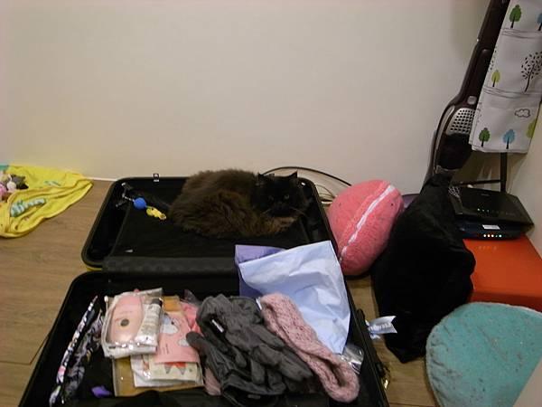 黑皮偷偷跟行李箱融合