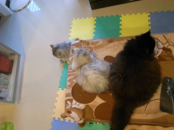 三貓一起入鏡
