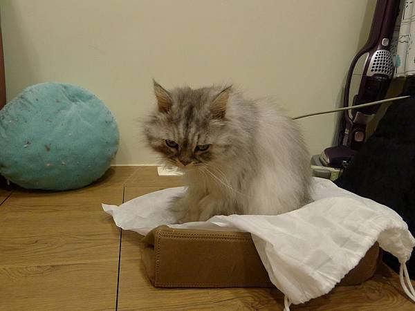 貓真的對一個區塊沒辦法控制