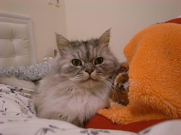 他喜歡毯子