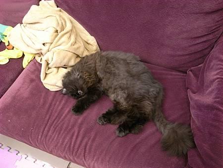 黑皮會自成一格的睡