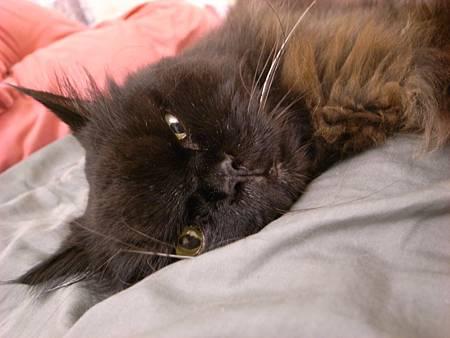 黑皮睡覺被我吵醒~