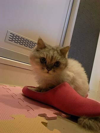 她很愛我的拖鞋勒~