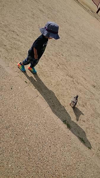 鴿子真的很不怕人~