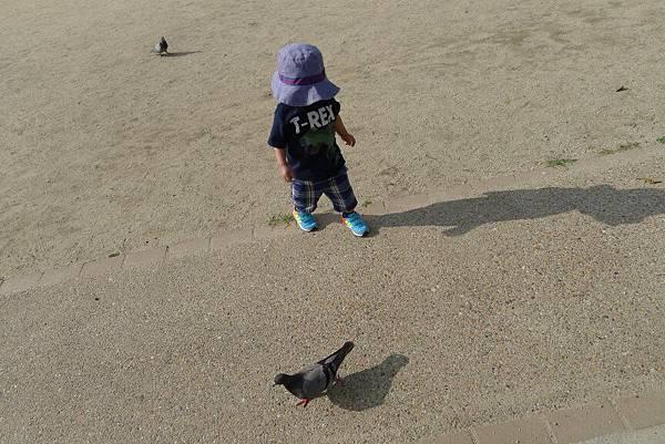前後都有鴿子勒~