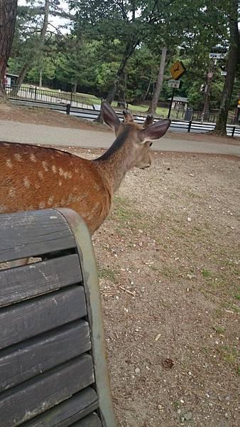 這隻鹿叫好大聲~
