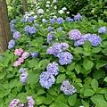 藍藍紅紅紫紫的好漂亮呀~