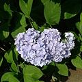 淺淺的藍還是紫色呀?!