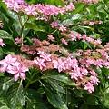 還有這種花瓣顏色兩種的~