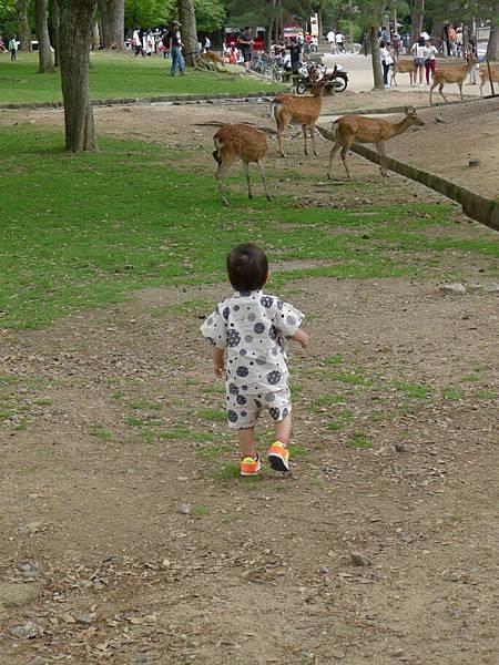 衝過去看鹿