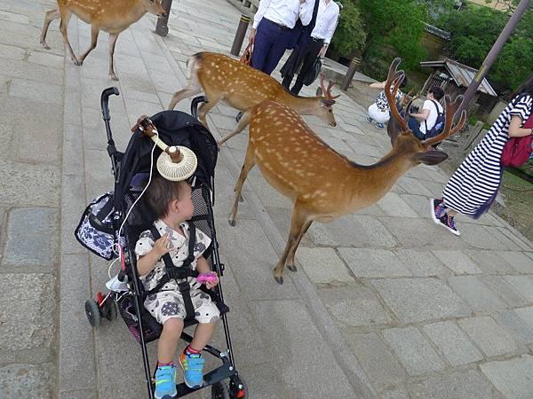 我推著他前進~他還會張望小鹿