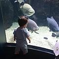 這個魚夠大他應該看的出來吧~