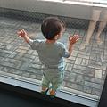 海遊館希望要寄推車,這小子一直在看外面不肯入館