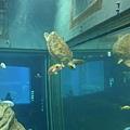 很自在的海龜~