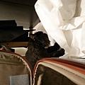 去日本前黑皮在行李箱後面走來走去