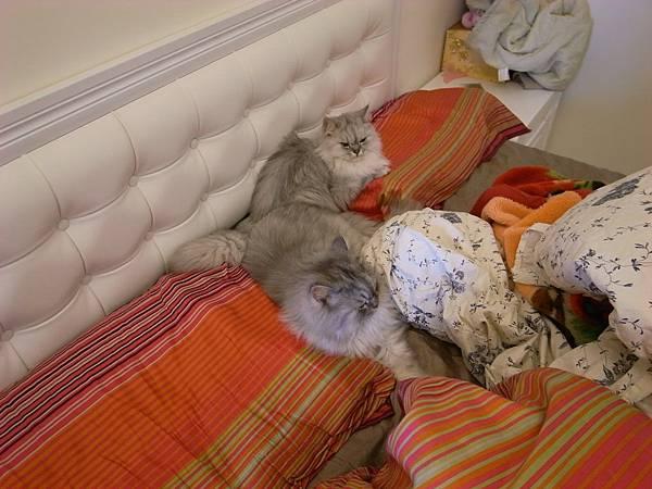 兩隻還會考在一起睡~