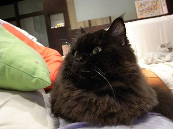 黑皮很愛這個沙發呀~