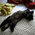 每天早上我們出門前他吃飽就會進來這邊躺