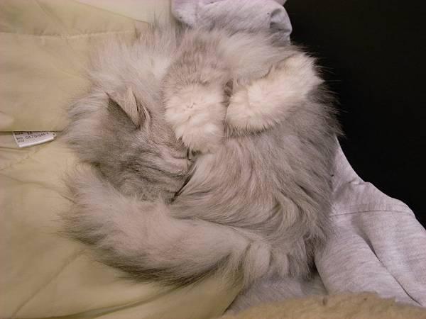 睡到手遮臉的卡妞