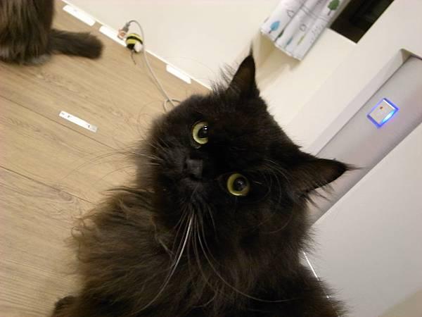 黑皮很可愛會偷偷在門口看我幹麻~