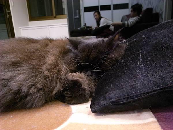 黑皮靠著枕頭好像很好睡勒~~