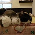 卡拉滿愛這張床~常常自己躺在這邊勒~