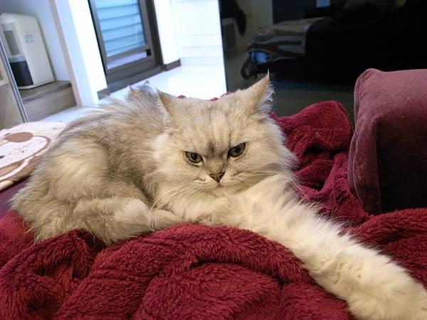 卡拉整個壓在我的懶人毯少~~