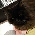 黑皮躺在他最愛的沙發上