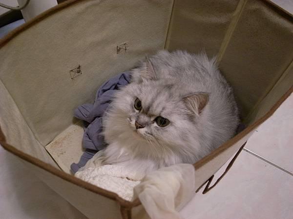 準備丟掉的箱子~卡妞躲進去
