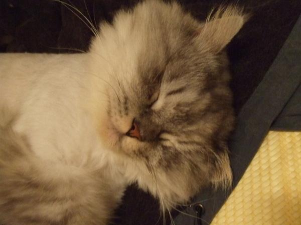 我超愛灰皮這種睡臉