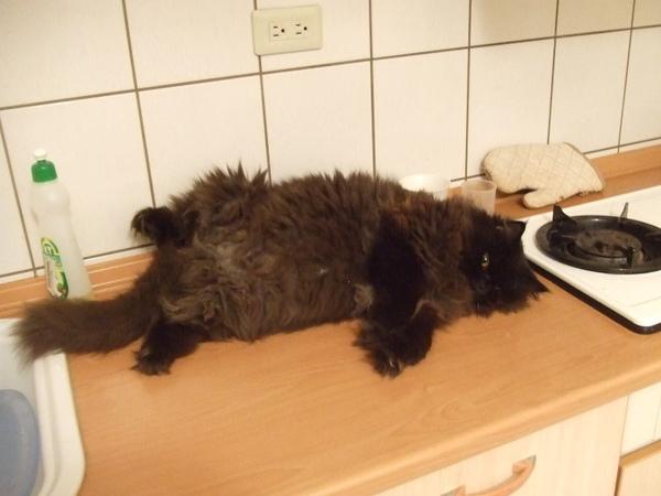 暈倒在廚房~~