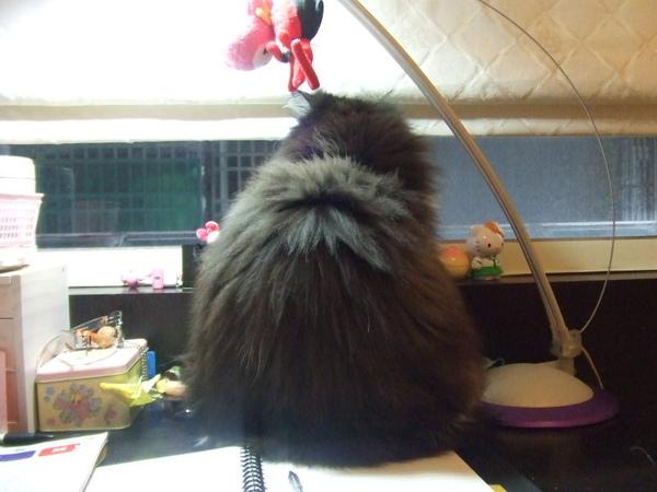不讓我唸書的貓~~