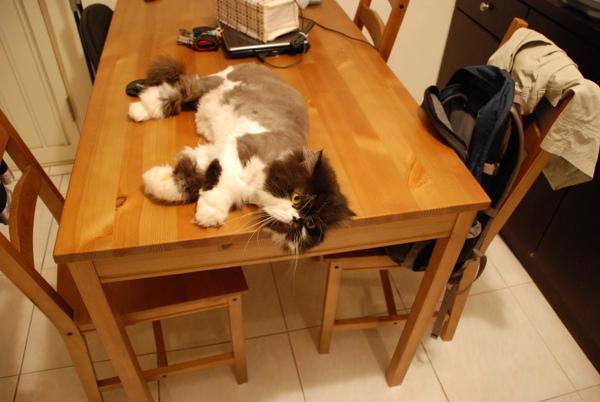 卡拉也很愛餐桌~~