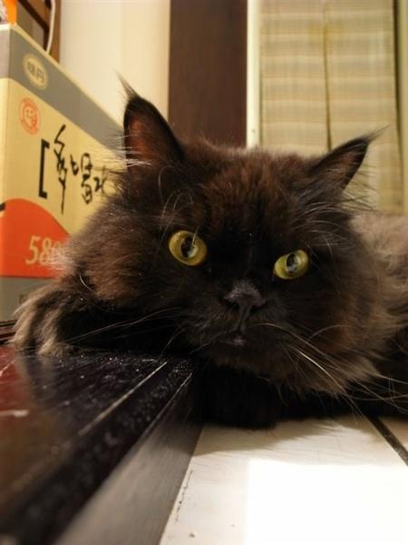 黑皮是喜歡睡在推門的走道上~