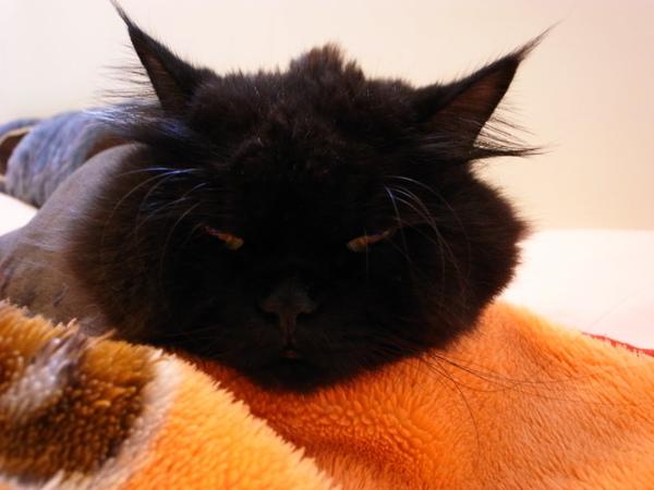 黑皮可能是會冷吧~都會趴在毯子上