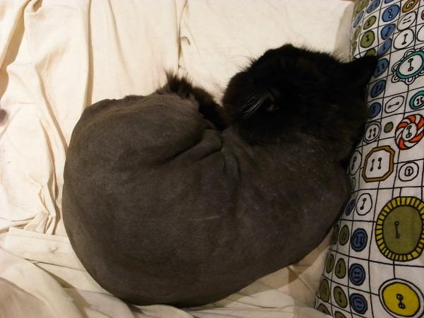 黑皮好像很舒服的再睡~~