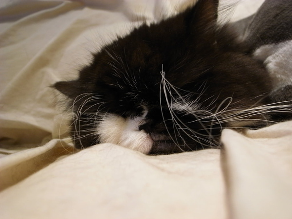 卡拉在睡覺~他很愛這個位置~~~
