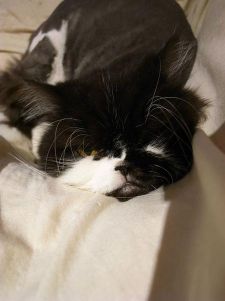 卡拉睡覺的時候很愛這個樣子的躺著...而且很固定這個位置~