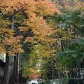 光是走到東福寺的路都覺得很棒~