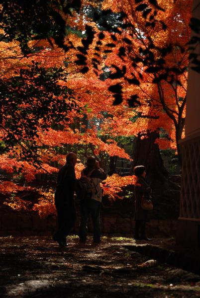 一爬上來就看的風景~很美的透出橘光~~