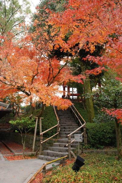 這邊上去的階梯~楓葉最漂亮~~