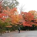 周圍也很多楓葉~很漂亮~~