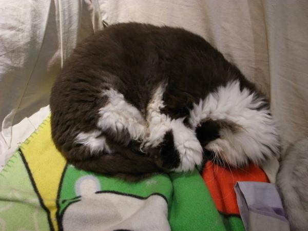 卡拉又再度抱腿睡了~~