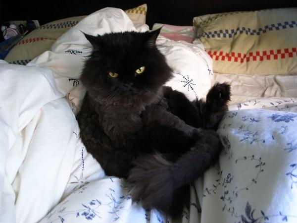 黑皮開心的躺棉被上~~