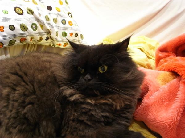 黑皮比較少躺沙發~因為都被其他貓搶走了~~