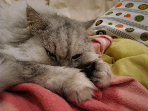 妹在愛睡~~