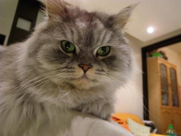 那幾天貓都很乖不會靠近和室說~~