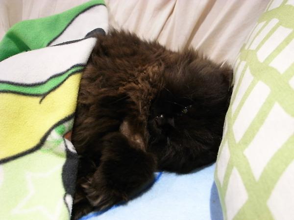 黑皮剛回家的時候味道很重~我們就不讓他進房間睡~
