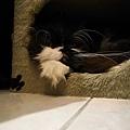 卡拉突然很愛躲進去~~很好笑~