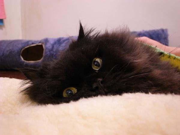 這個墊子給黑皮當枕頭~很可愛~~